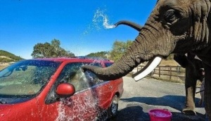 Elephant_Car_Wash